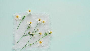 Фото бесплатно cvety, romashki, fon