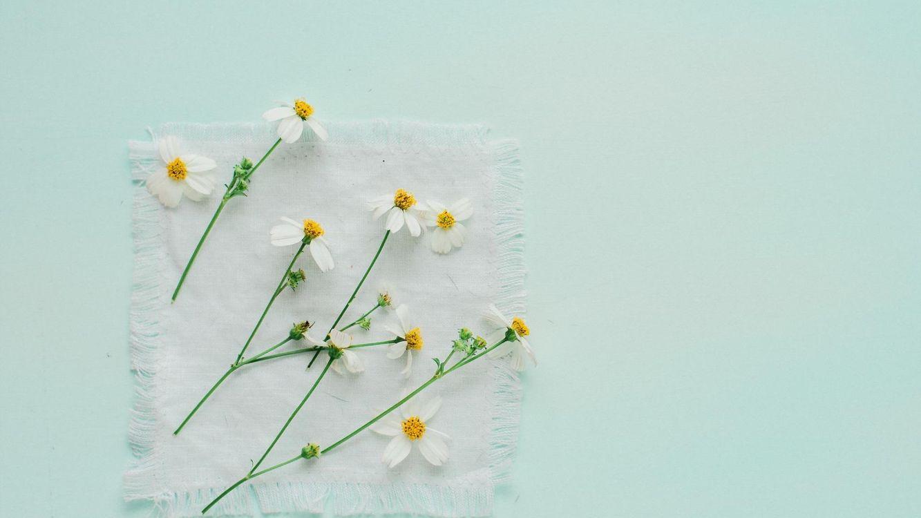Фото бесплатно cvety, romashki, fon, цветы