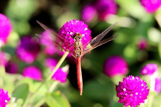 Фото бесплатно насекомые, стрекозы, макросъемка