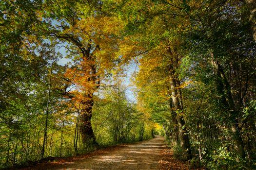 Бесплатные дорога, деревья красивые обои на рабочий стол