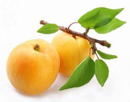Фото бесплатно абрикосы, полоды, листья