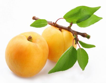 Photo free apricots, polody, leaves