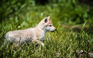 Фото бесплатно природа, трава, собака