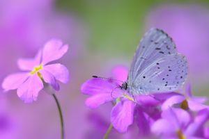Фото бесплатно фотографии, бабочка, насекомое