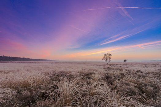 Фото бесплатно иней, поле, трава