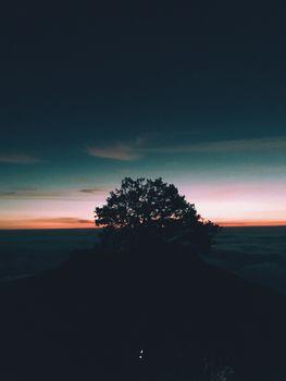 Обои дерево,холм,закат,горизонт,tree,hill,sunset,horizon