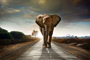 Заставки слон,животное,дорога,закат,уши,хобот,идёт