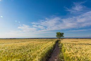 Фото бесплатно пейзаж, степь, пейзажи