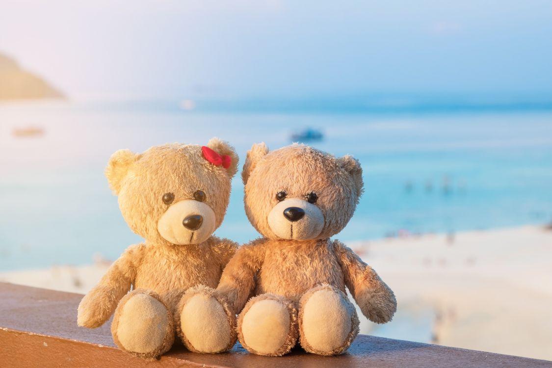 Фото бесплатно плюшевый медведь, чучела животных, пляж - на рабочий стол