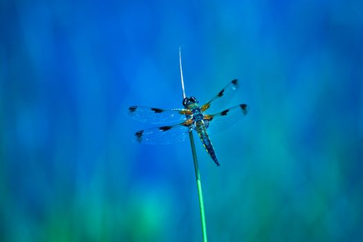 Photo free a blade of grass, dragonfly, macro