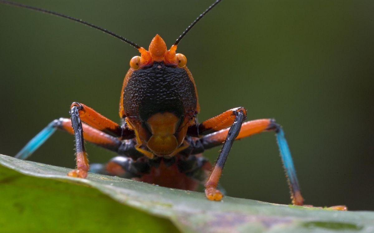 Фото жук-листоед беспозвоночный насекомые - бесплатные картинки на Fonwall