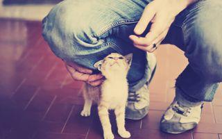 Бесплатные фото кошка,фильтр,животные,джинсы