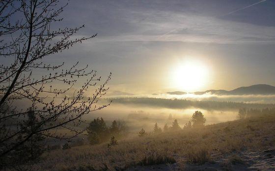 Фото бесплатно туман, дерево, почки