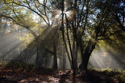 Photo free beautiful, sun rays, countryside