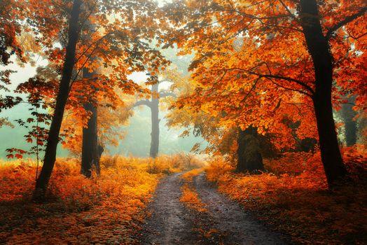 Autumn screensaver, autumn time, it desk