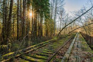 Бесплатные фото старая железная дорога, лес, деревья, пейзаж