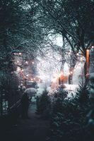 Заставки зима, лес, люди