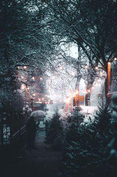 Бесплатные фото зима,снег,природа,лес,дерево,зонтик,улица,путь,елка,знак,огни,город Нью-Йорк зима