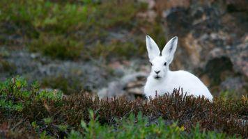 Фото бесплатно животные, природа, трава