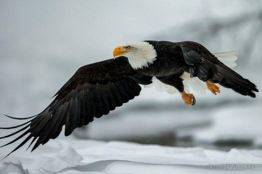 Фото бесплатно птицы, орел, крылья