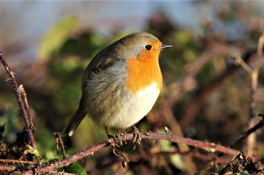 Фото бесплатно животное, птица, ветви