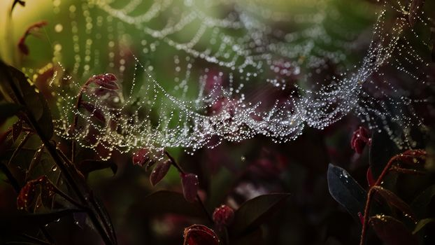 Photo free cobwebs, insect, drop
