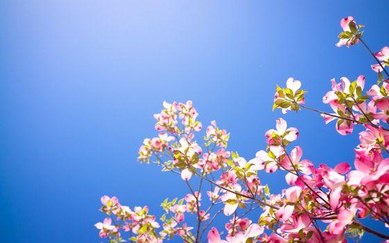 Фото бесплатно кизил, весна, ясное небо