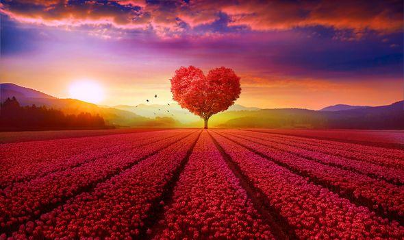 Фото бесплатно в форме сердца дерево, закат, поле