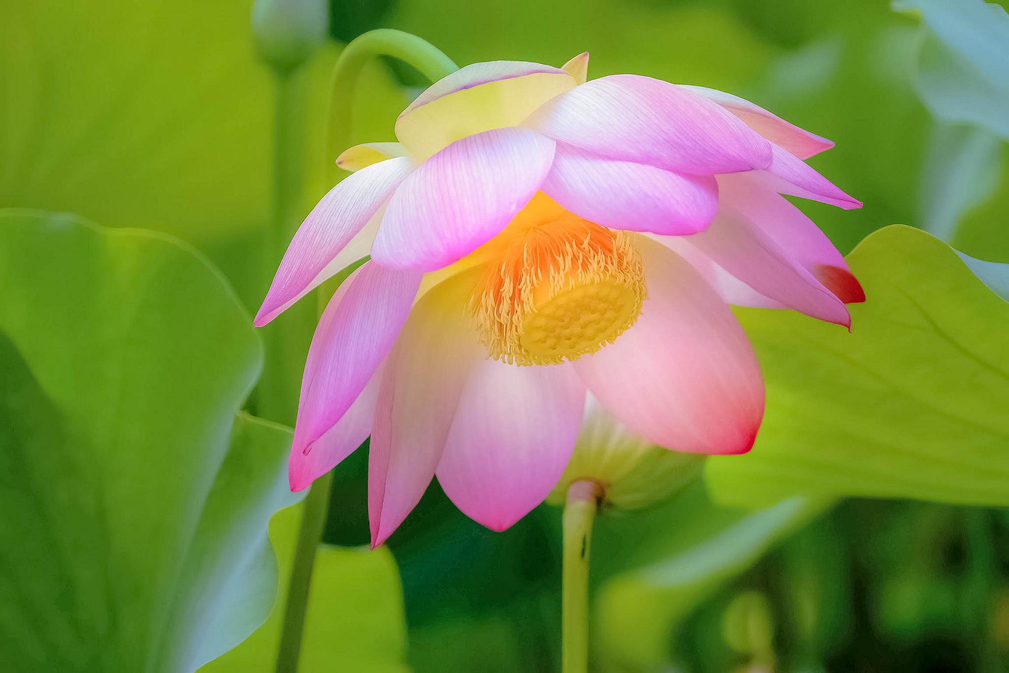 чашу красивые цветы фото по одному цветку повезло попал