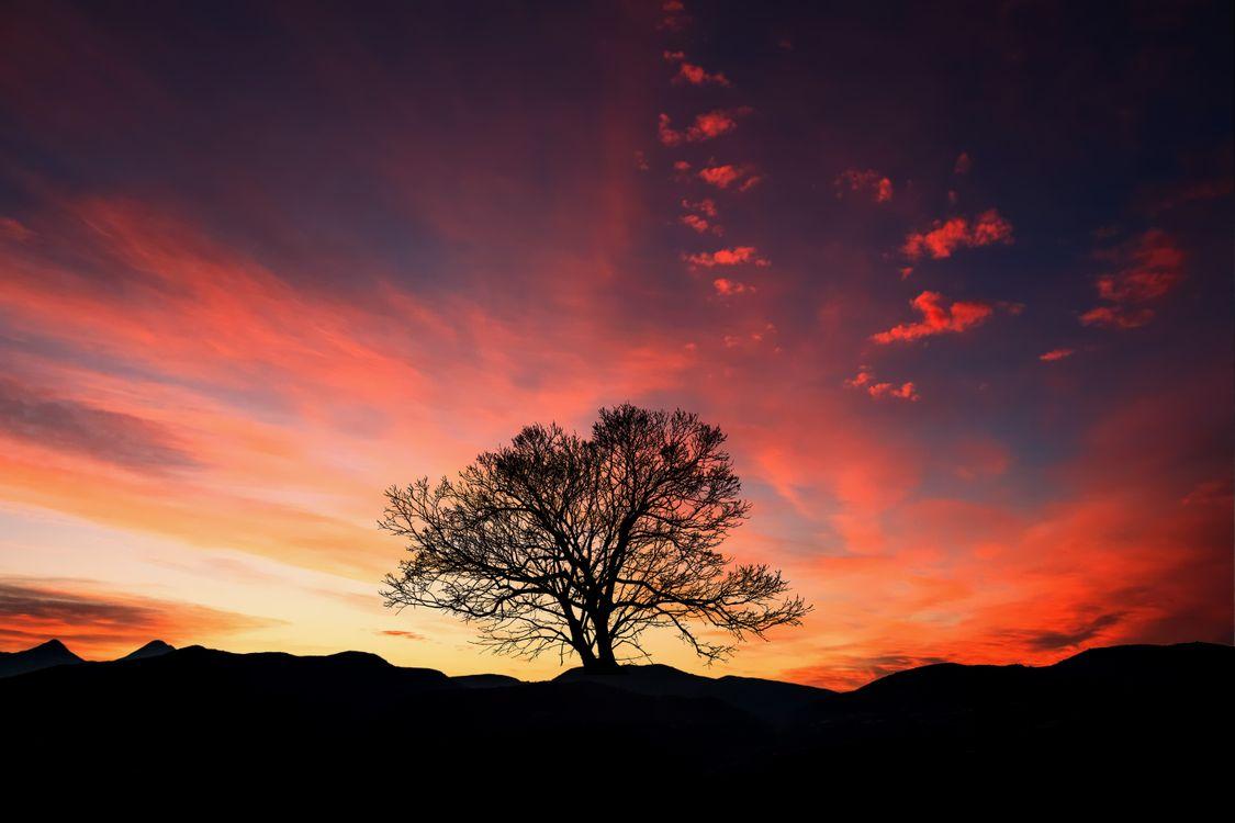 Закат и дерево · бесплатное фото