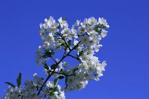 Фото бесплатно цветок, ветка, цветение