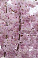 Фото бесплатно весна, бесплатные изображения, весеннее пробуждение