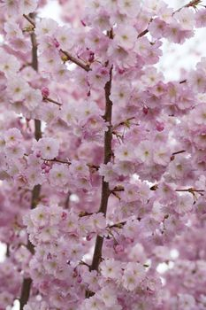 Photo free spring, free images, spring awakening