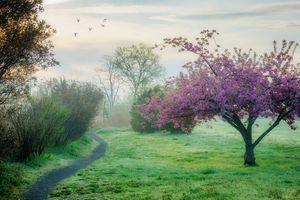 Бесплатные фото весна,деревья,поляна,тропинка,туман,пейзаж,природа