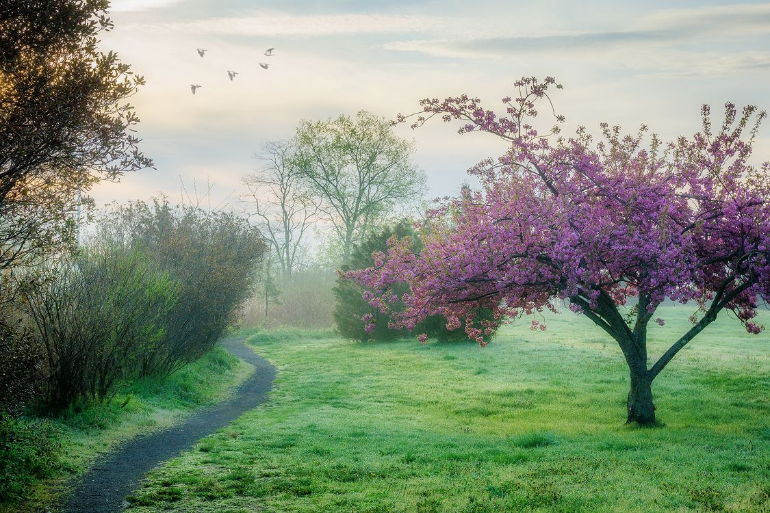 Фото бесплатно весна, деревья, поляна, тропинка, туман, пейзаж, природа, утро, рассвет, пейзажи