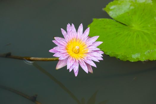 Photo free body of water, water lily, beautiful flowers