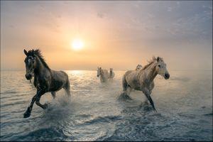 Фото бесплатно закат, водоём, лошади