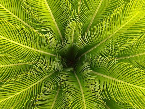 Фото бесплатно пальмовые листья, макро, зеленый