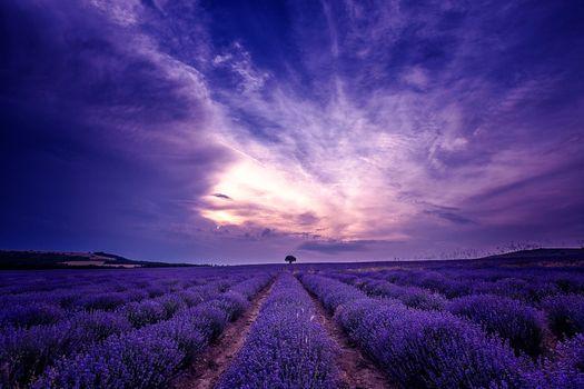 Photo free flowers, sky, lavender field