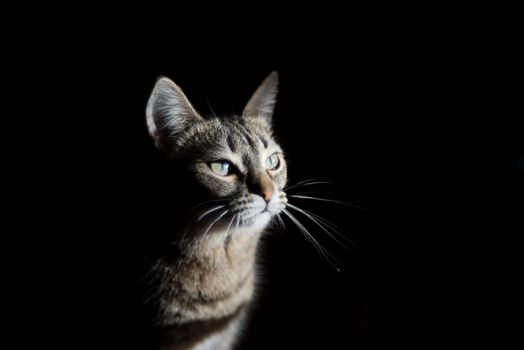 Photo free animal, cats, mustache