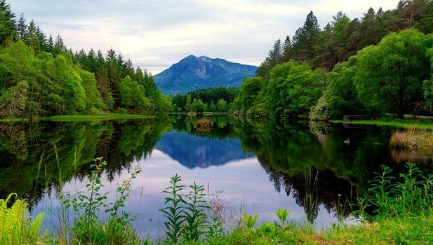 Фото бесплатно лес, небо, ветви