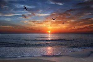 Закат и чайки в Майами