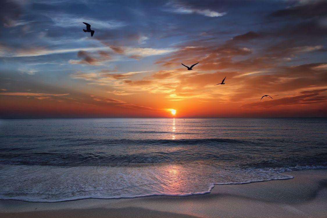Закат и чайки в Майами · бесплатное фото