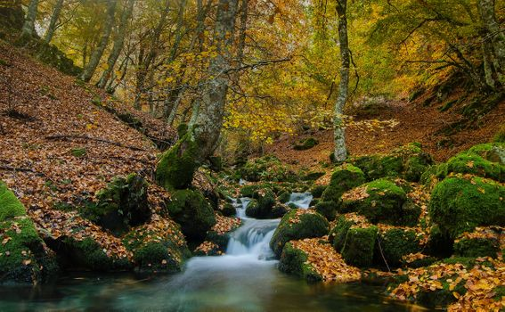 Photo free forest, autumn waterfall, river