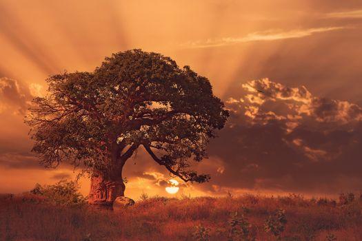 Photo free baobab trees, nature, old tree