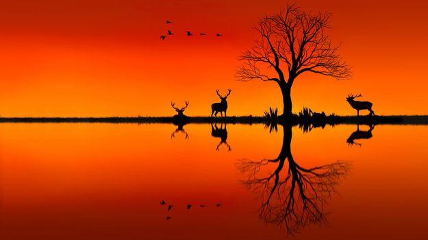 Фото бесплатно лось, животные, закат