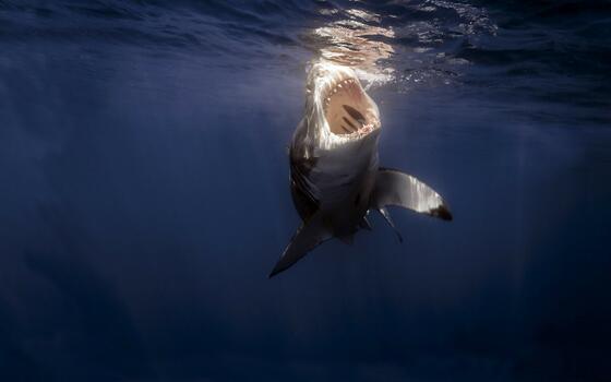Фото бесплатно ламнообразные, акула, морское млекопитающее