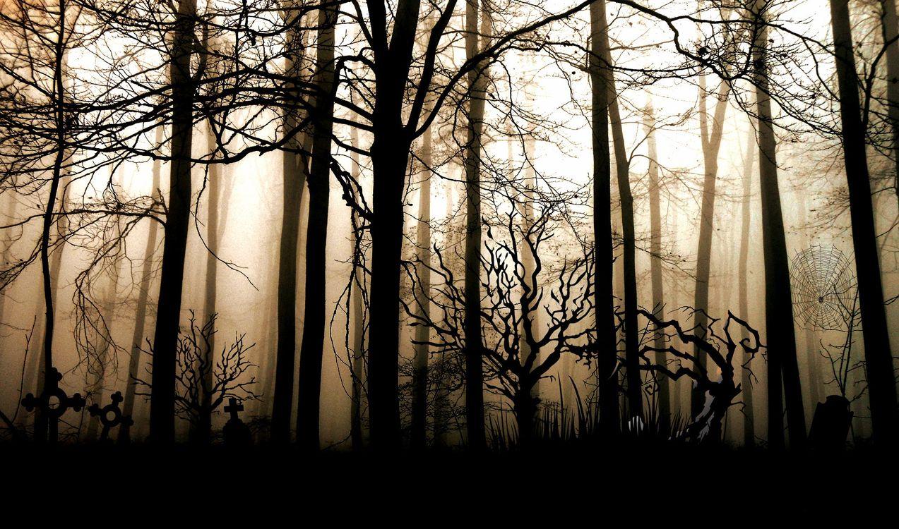 Фото ветви природа силуэт - бесплатные картинки на Fonwall