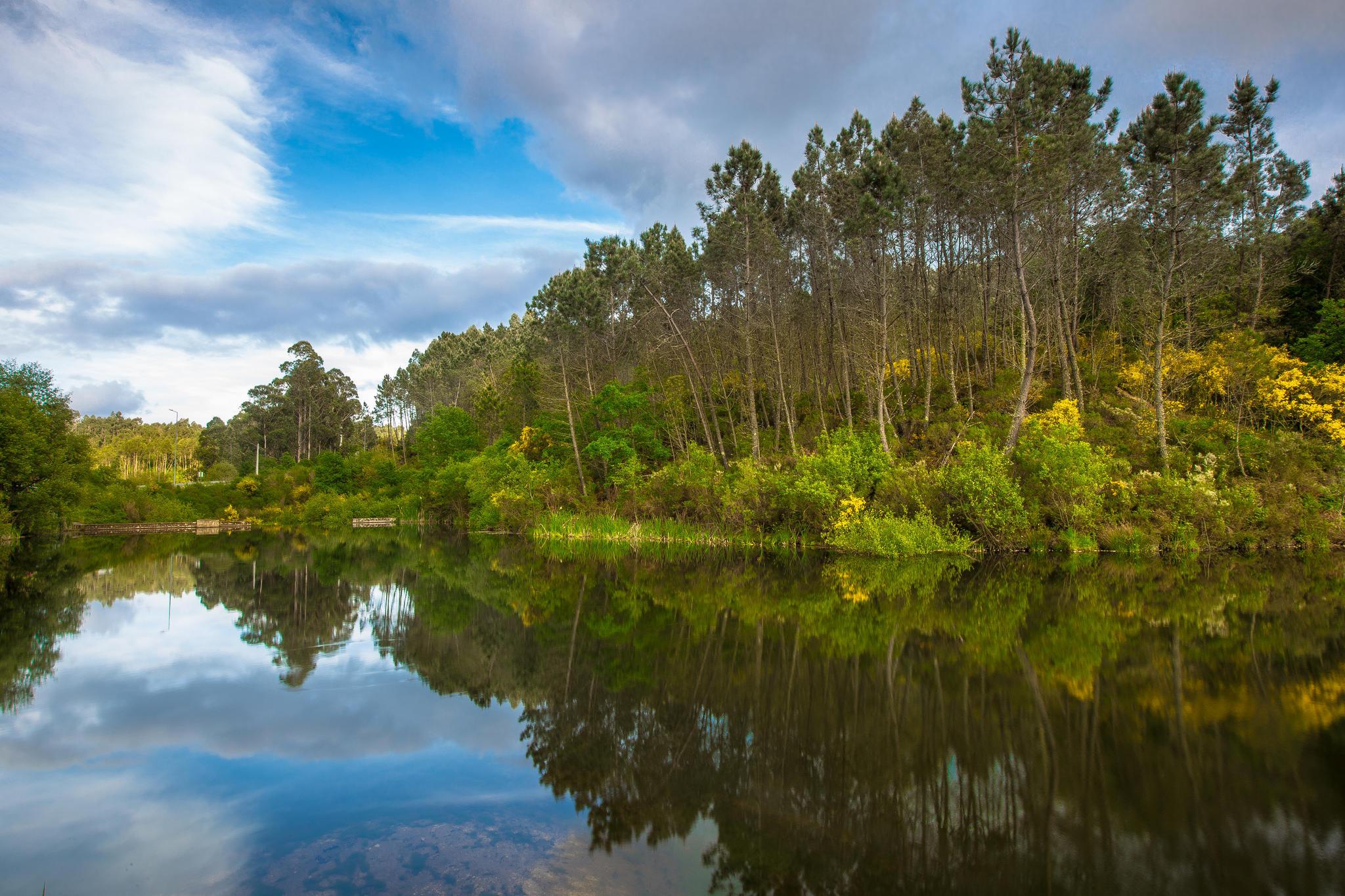 обои озеро, лес, деревья, пейзаж картинки фото