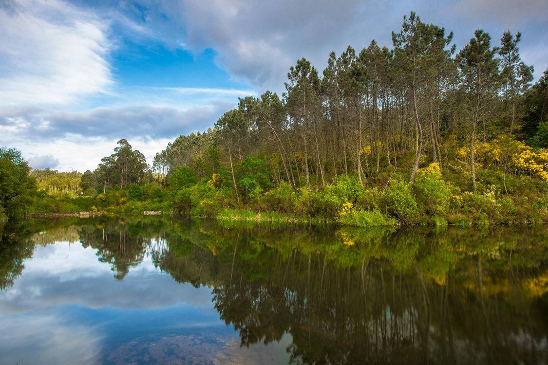 Фото бесплатно озеро, лес, деревья, пейзаж, пейзажи